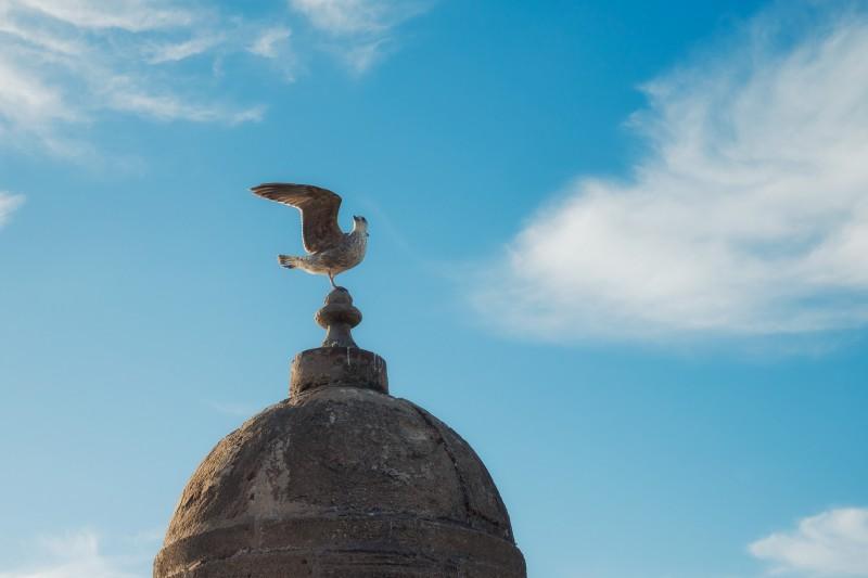 Seagull in Essaouira